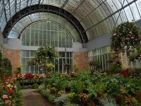 Winter Gardens, Auckland Domain