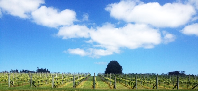 auckland vineyard tour